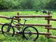 自転車フリマ(2013年5月26日 赤坂にて)の画像
